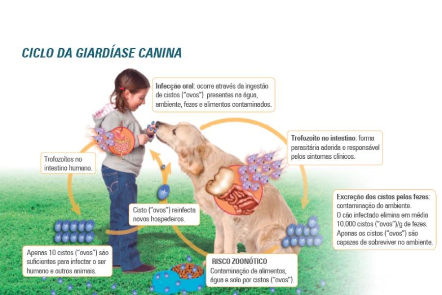 Ciclo Giárdia canina em humanos