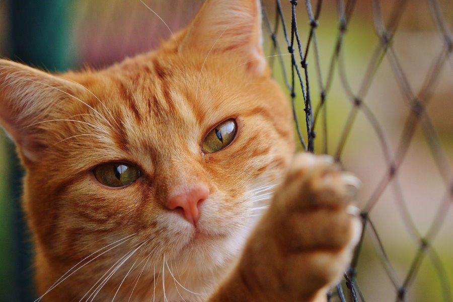 Motivos para ter um gato