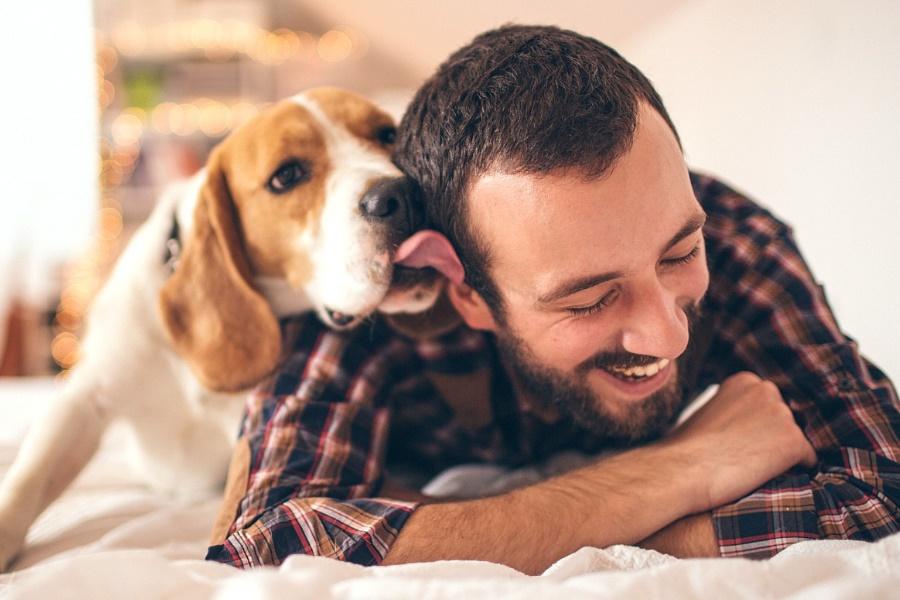 Por que os cachorros lambem o dono, as patas e as pessoas