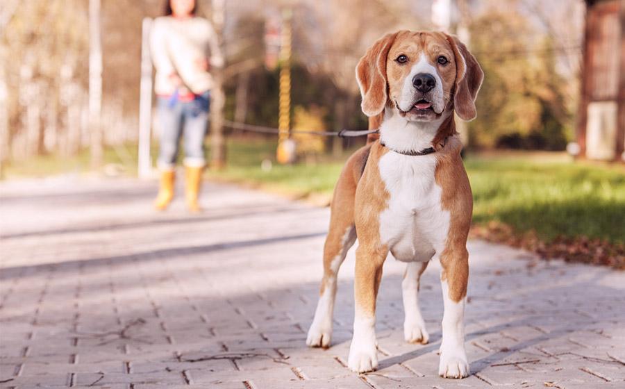Passear com cachorro em SP