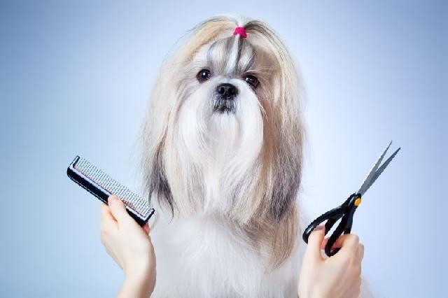Tosa em cachorro: qual o tempo ideal entre cada uma?